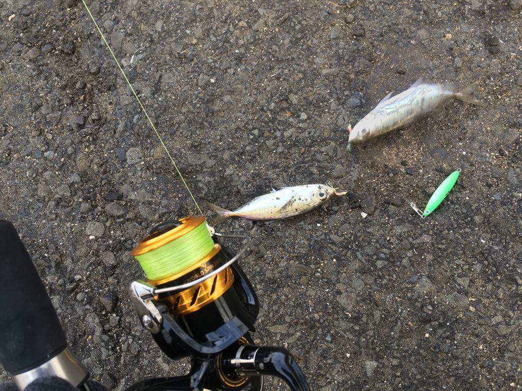 ジグサビキでアジ釣り