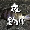 タチウオ狙いに夜釣りに行ってみた